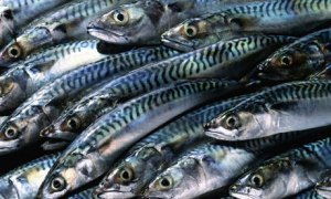 Image from this fab article about sustainability and my favourite little fishy Mackerel